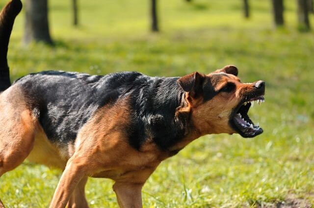 The Long-Term Effects of Vicious Dog Attacks