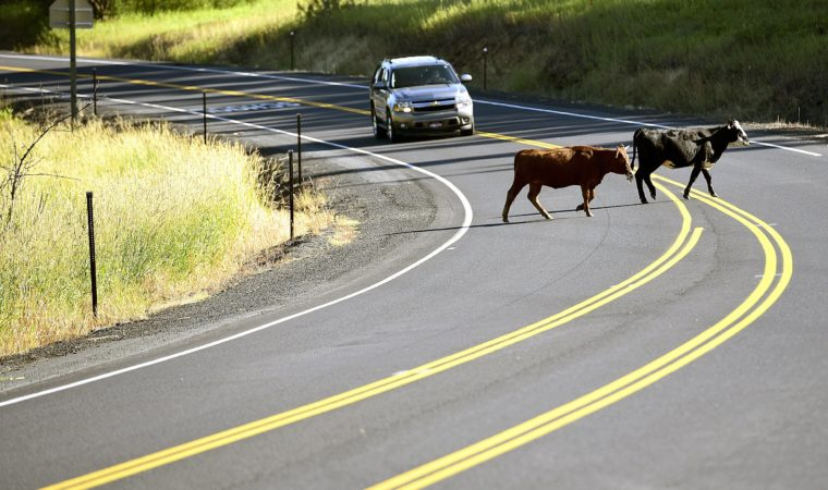 Injured by Livestock: Here's What You Need To Know